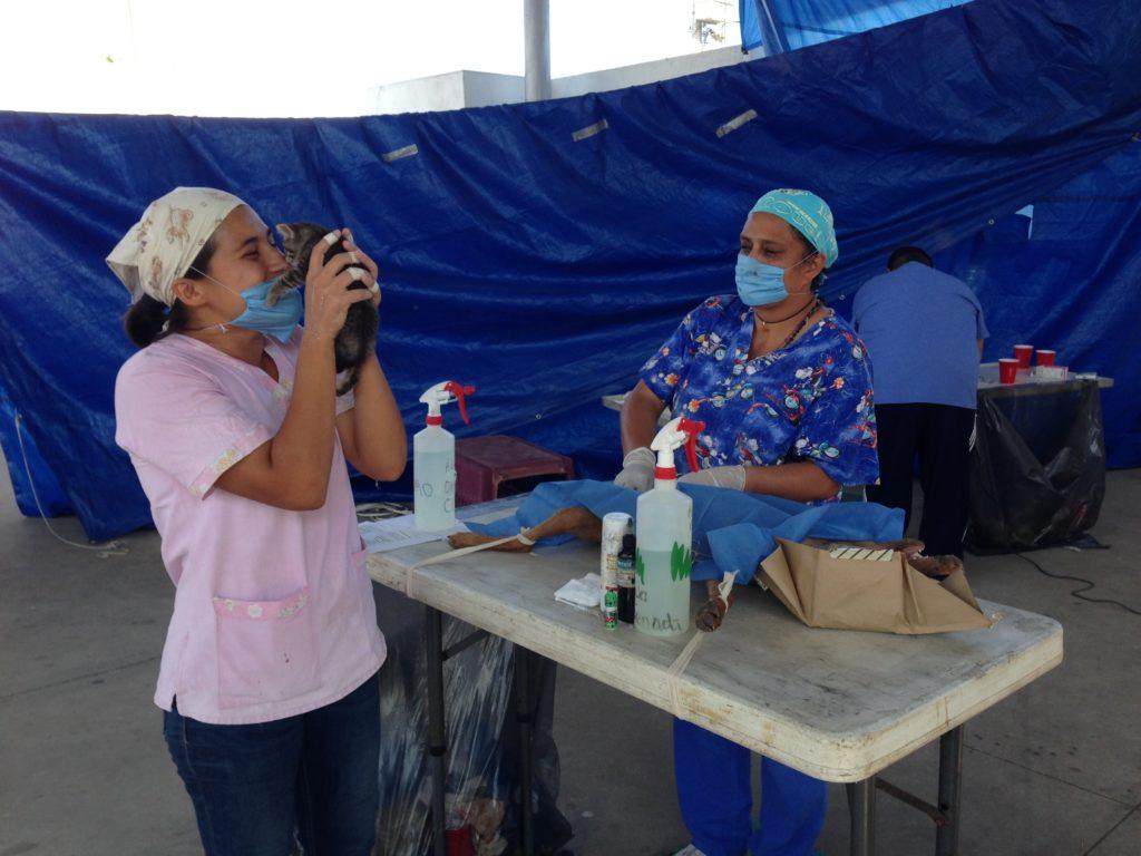 Spay & Play Beachside in Manzanillo Mexico - Humanitourism